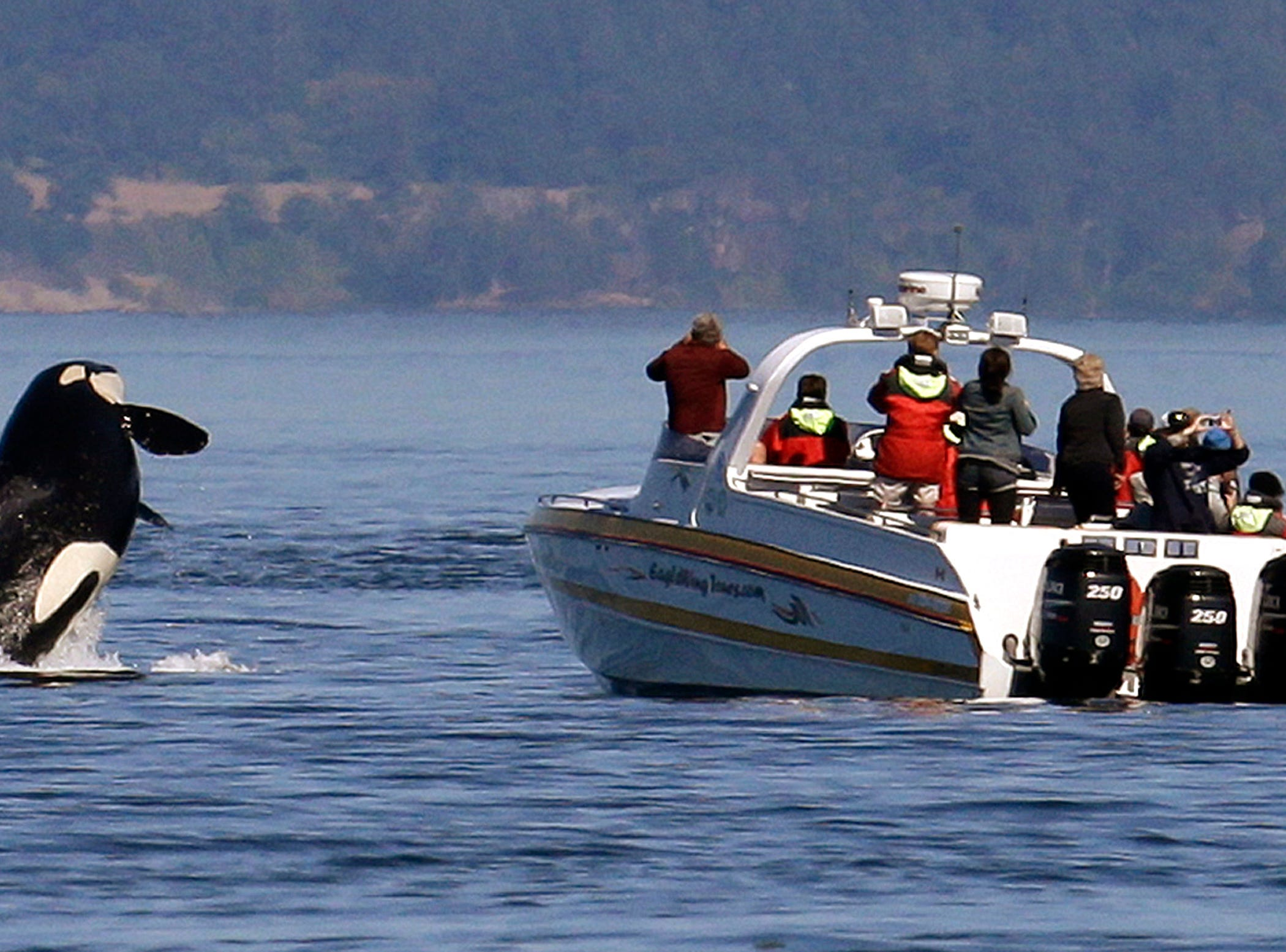 Group finalizes endangered orcas proposals with ban on tours