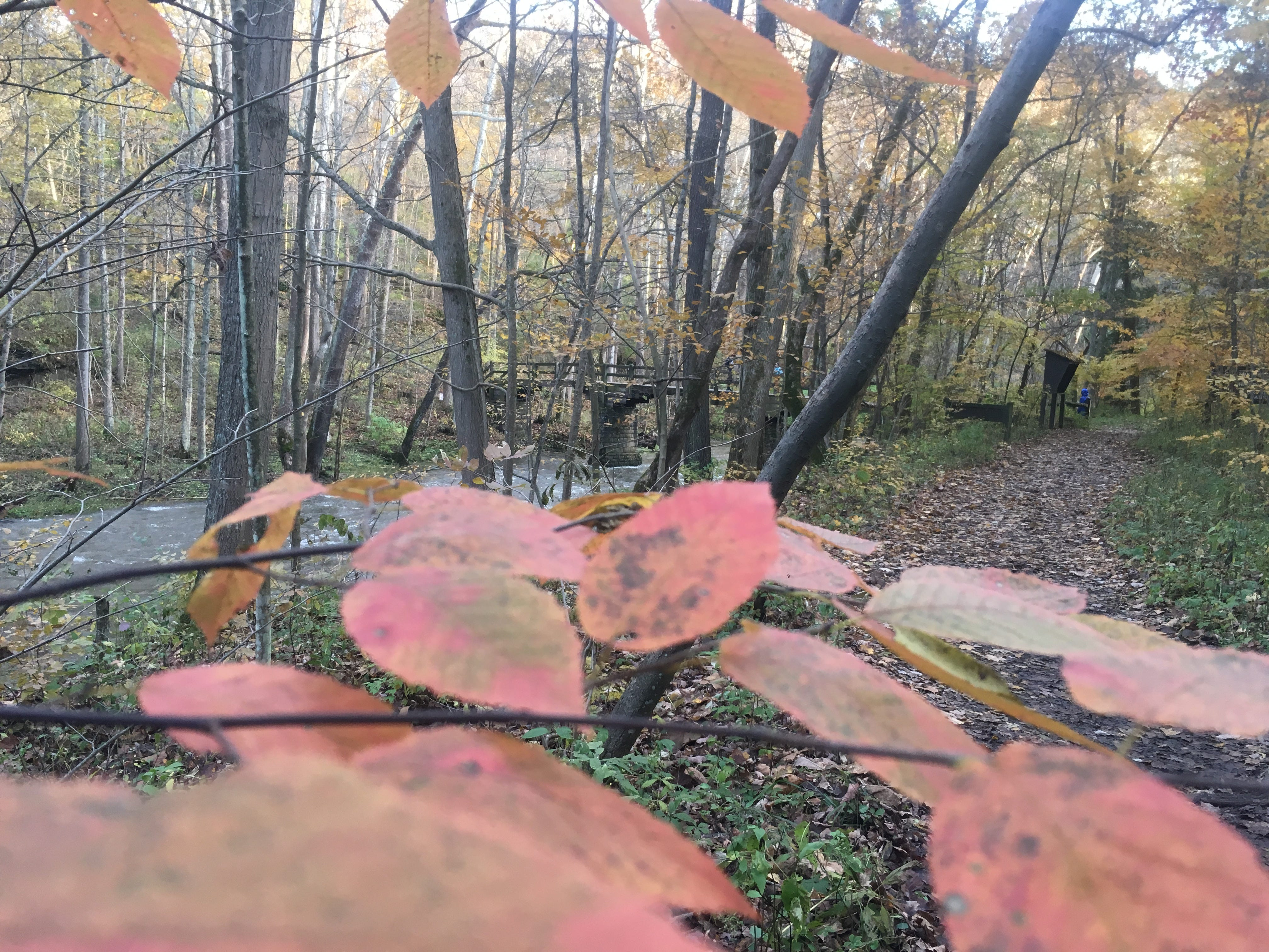 John Bryan State Park puts on an autumn leaf show.