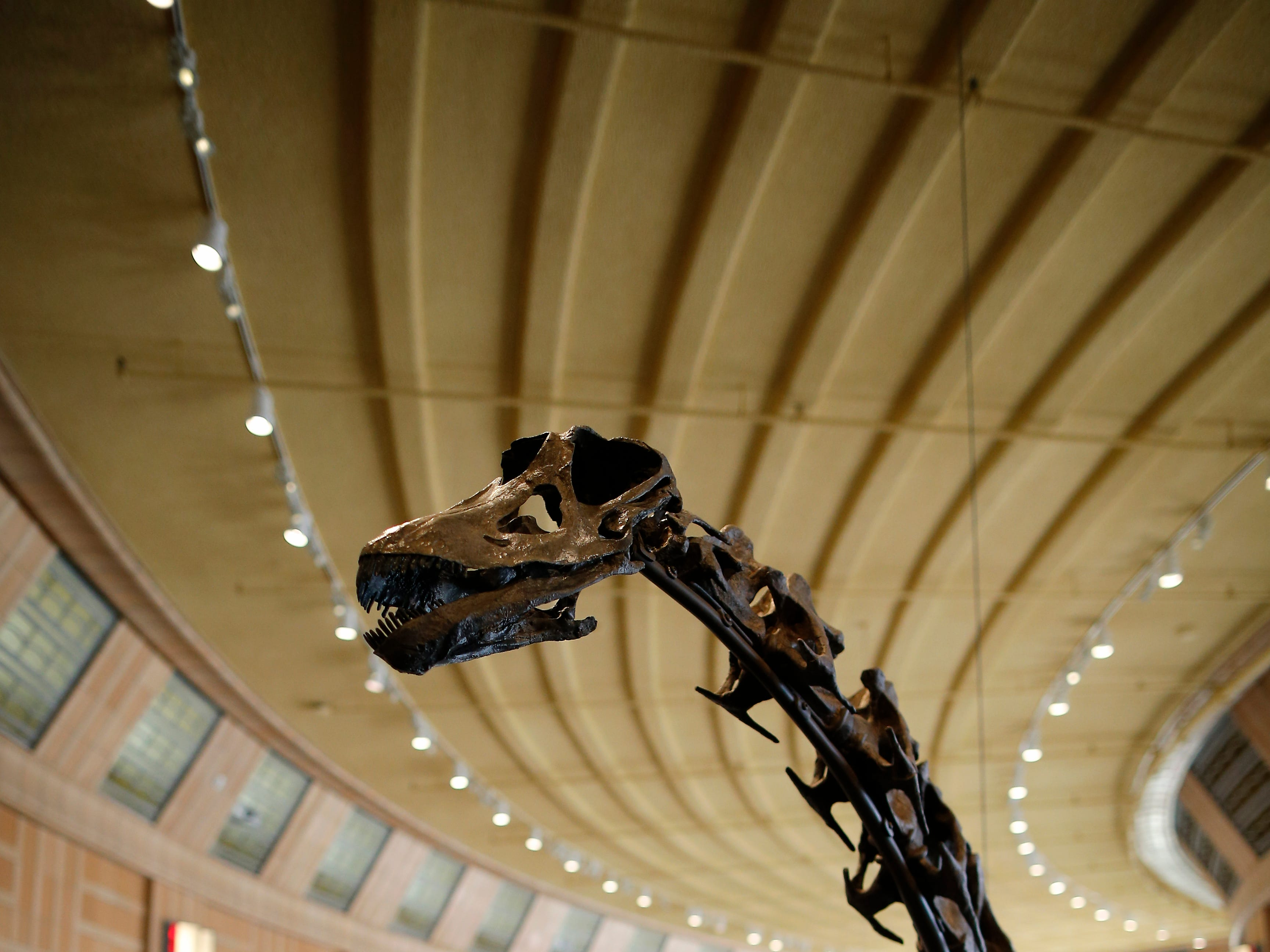 These one-of-a-kind dinosaurs now have a home in Cincinnati