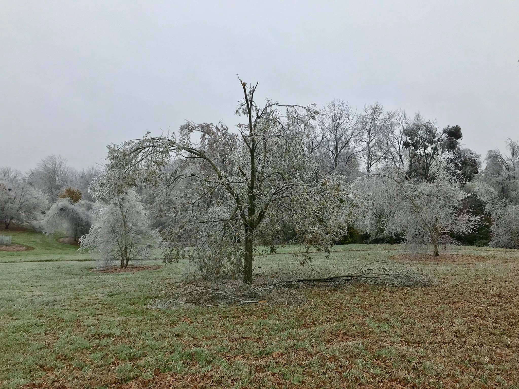 Thursday's ice storm damaged at least half of the trees at the Boone County Arboretum near Union, Kentucky.