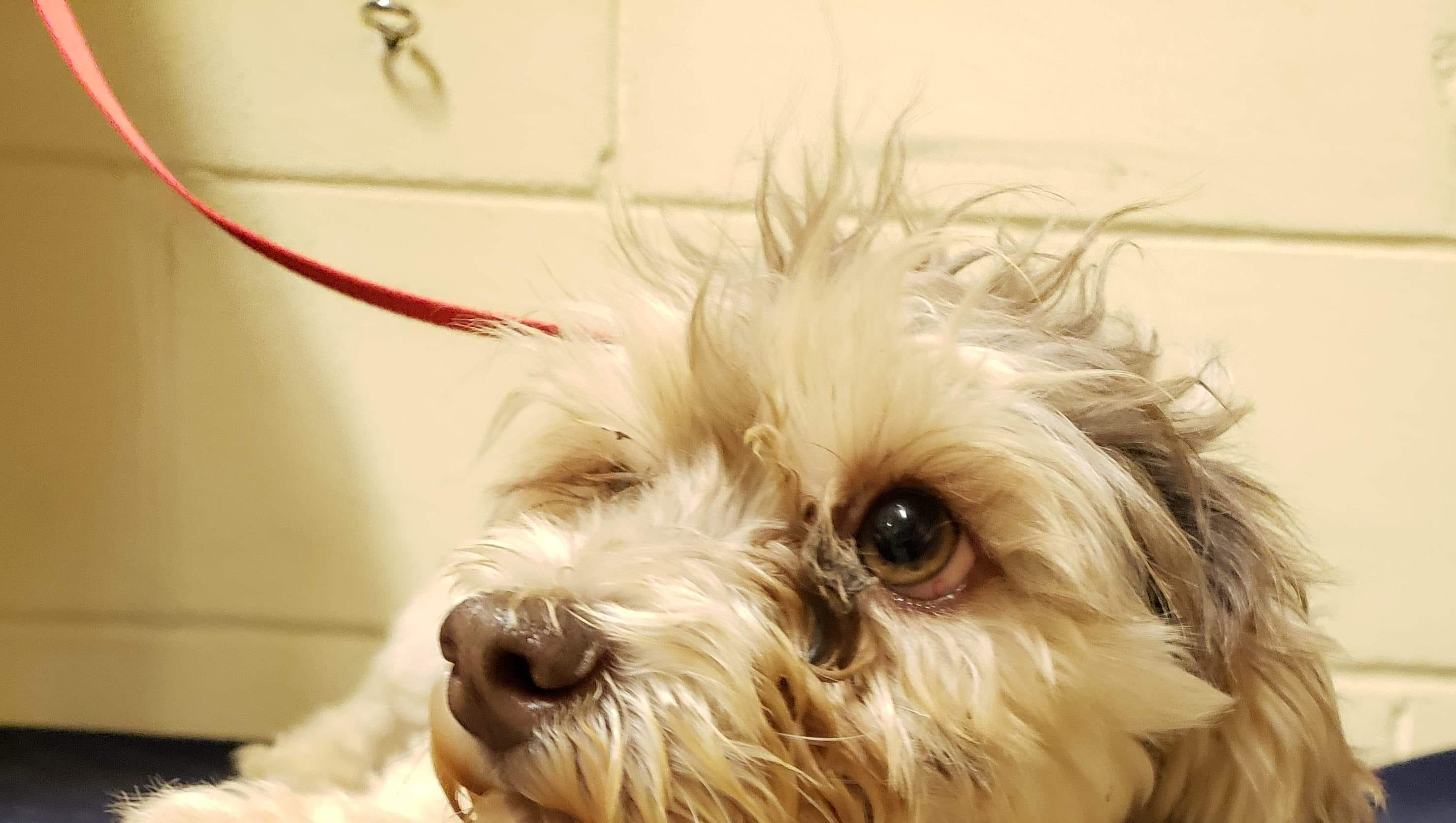 Five Havanese dogs arrived at the Somerset Regional Animal Shelter that were rescued from a home in Shamong.