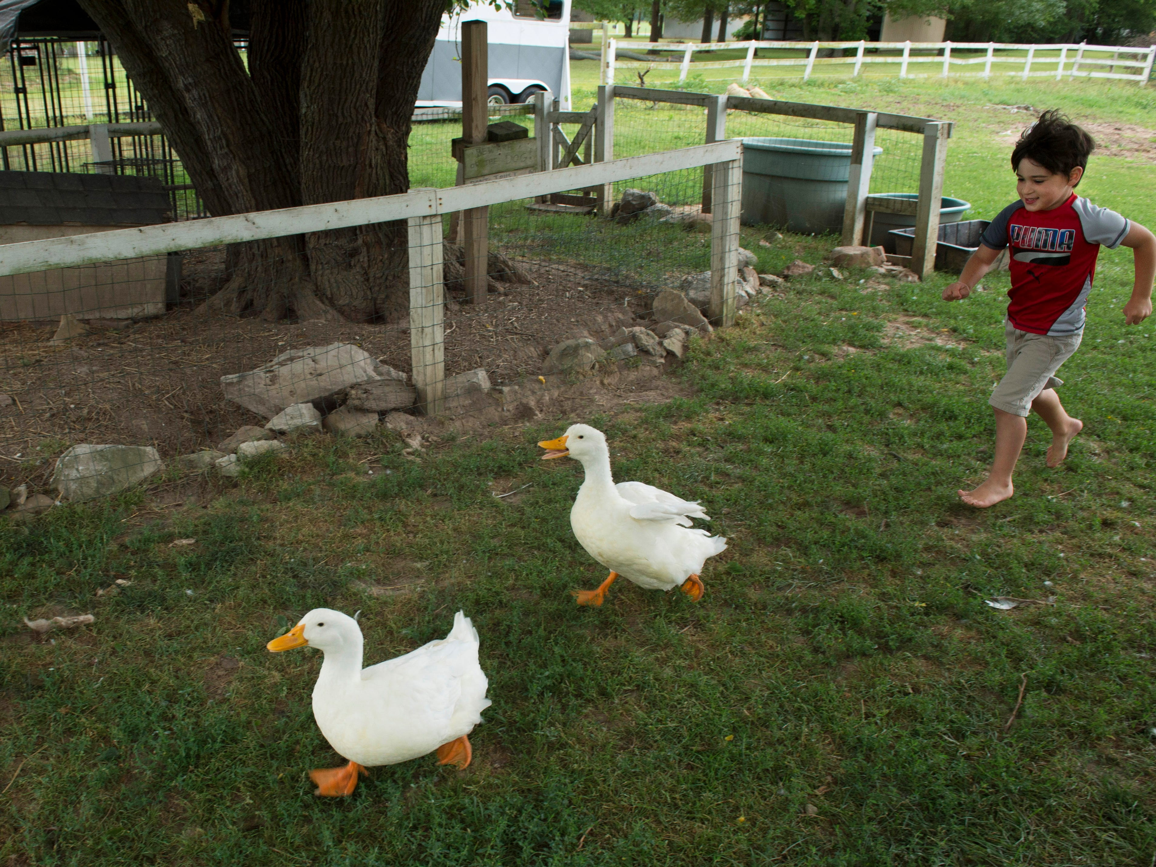 Leland keeps himself and the ducks busy whenever he visits his aunt's farm in Elberfeld, Ind. His mom, Amanda Smith, and he moved in with Rosanna Funkhouser's family for a few months after her mother died in March of 2017.