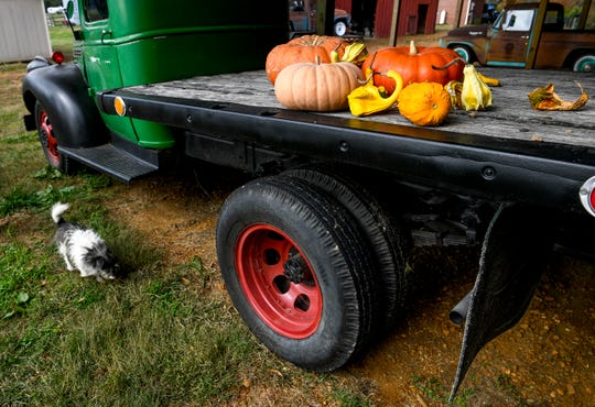 Bob walks by an old Ford pickup with squash and vegetables from the farm as seen at Stillwaters Farm in Henderson, Tenn., on Monday, Nov. 5, 2018.