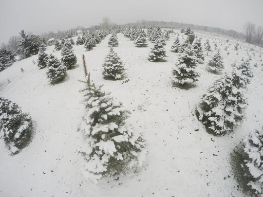 What better way to make holiday memories with the family than picking your own real tree?