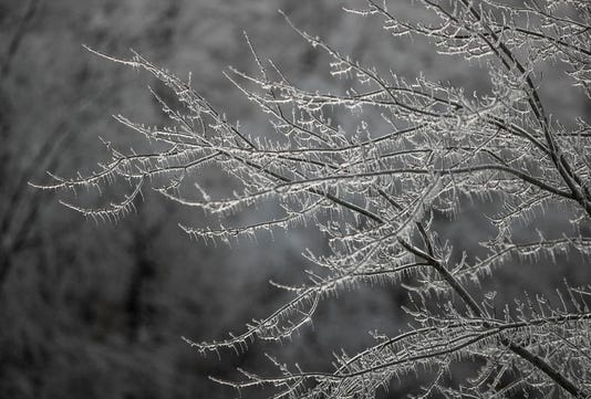 Frozen Tree Limbs