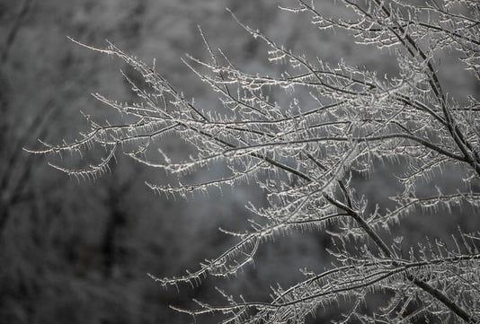 Frozen Tree Limbs