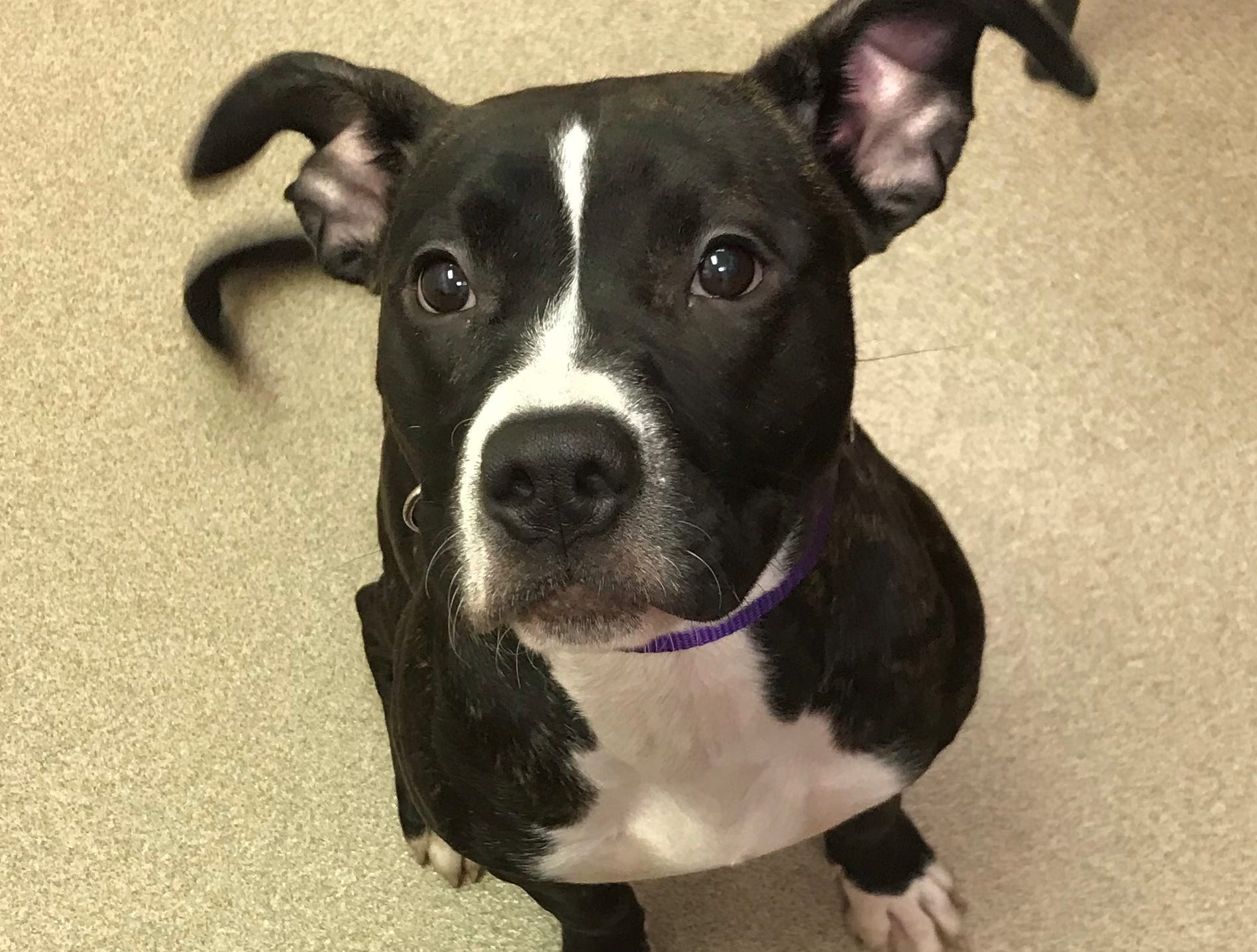 April, a 6-month-old mixed breed, has a lot of energy and is very curious. She is spayed.