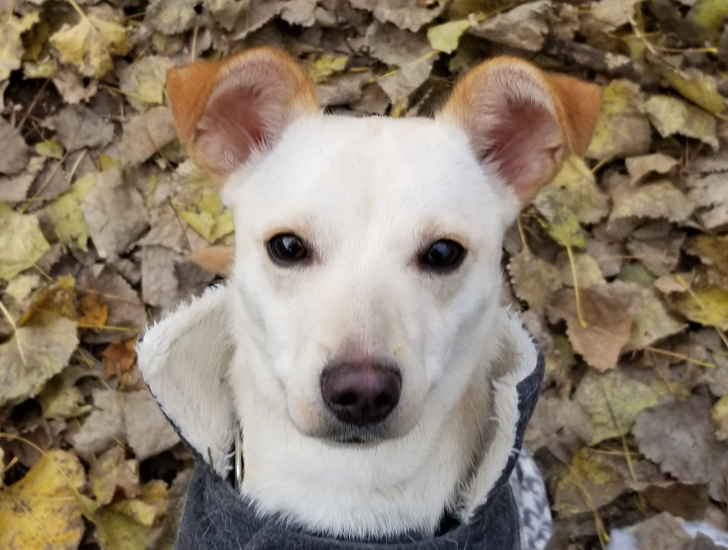 Nieve, a 1-year-old mixed breed, is super cute and needs just a little time to warm up to a new friend. She is spayed.