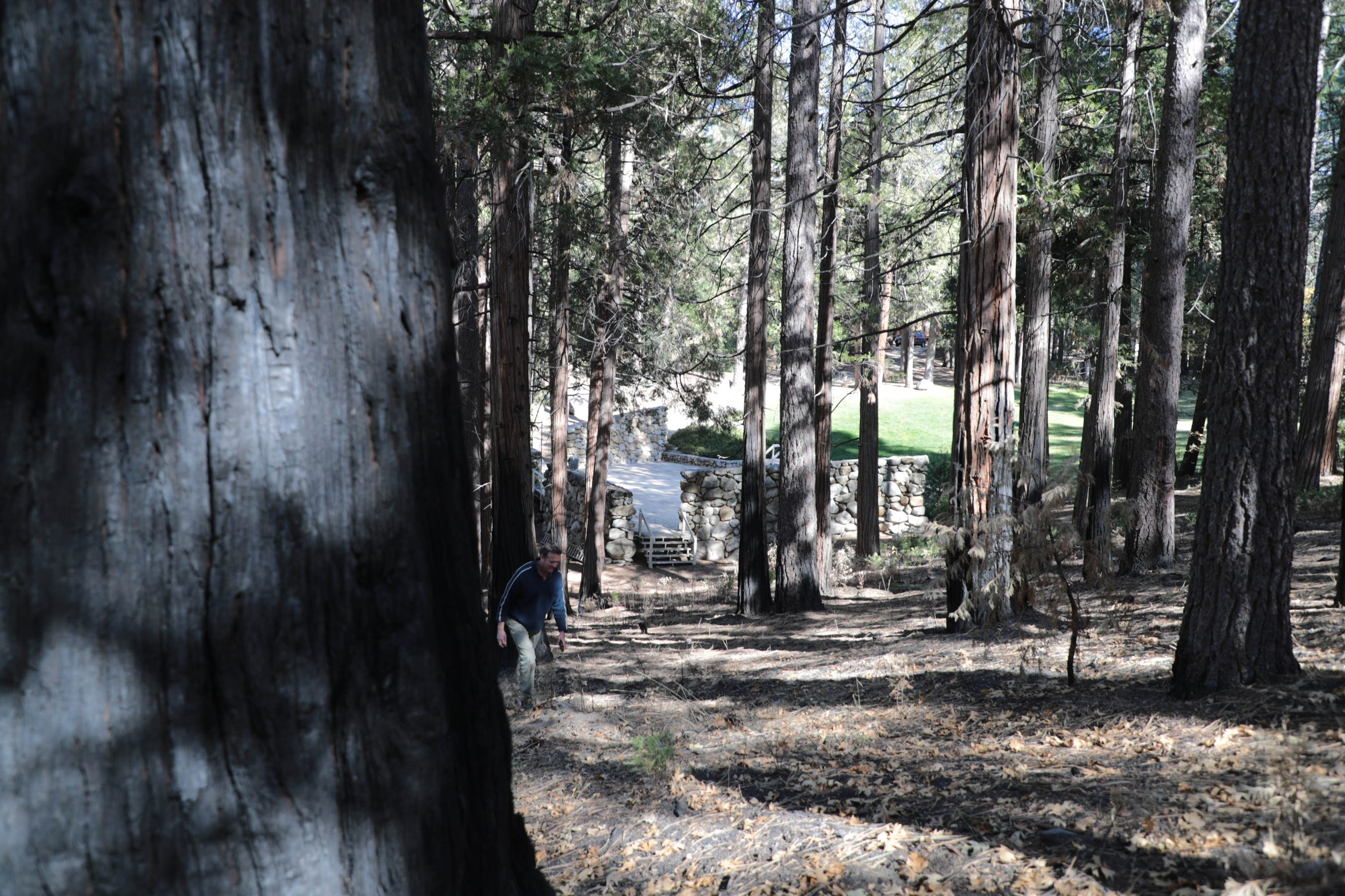 Two years before the Cranston Fire, Idyllwild Arts Foundation received grant funding to create a fuel break around the school's perimeter, including this area behind the on-campus amphitheater.