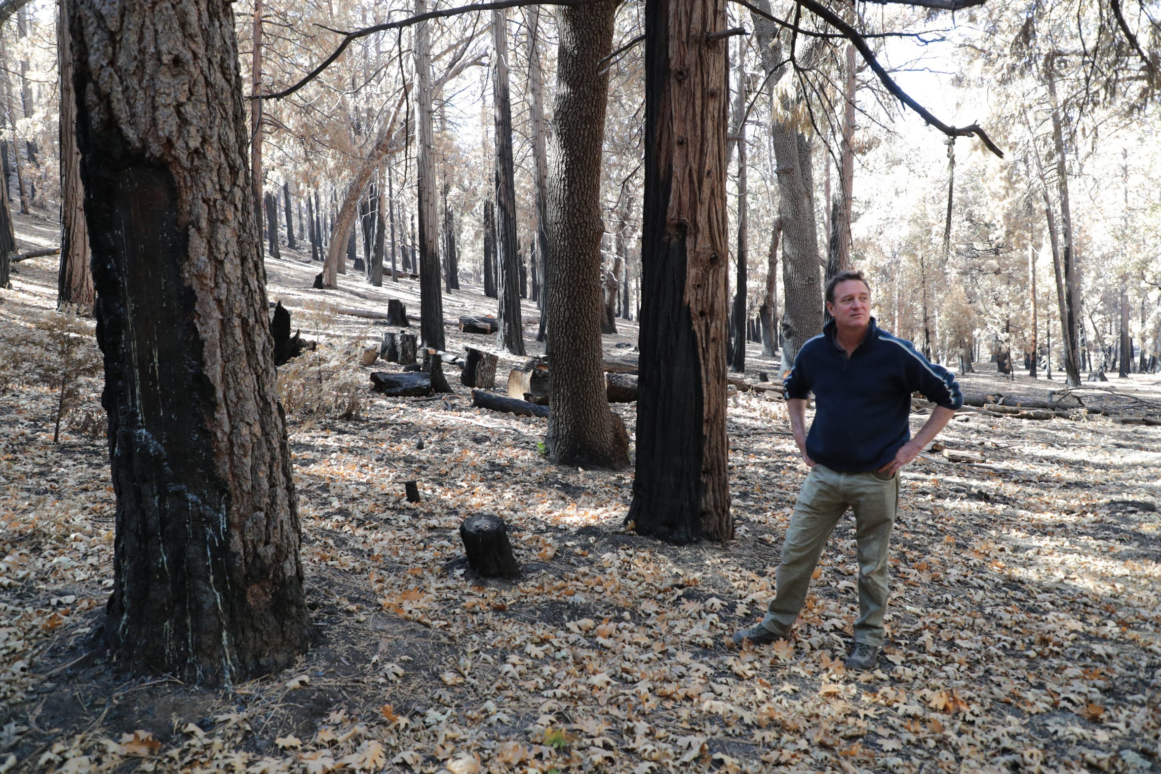 Idyllwild Forest Health Project founder Mark Yardas stands in an area of the forest that was thinned before the Cranston Fire in Idyllwild, Calif. The U.S. Forest Service lit a back burn in this grove on the first day of the blaze.