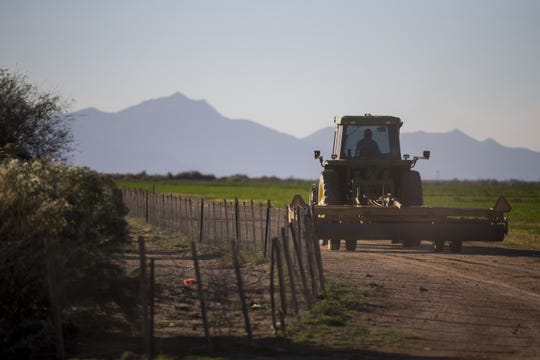 A farm worker drives a tractor on farmland in the Gila River Indian Community on Thursday, Nov. 15, 2018, near Chandler, Ariz.