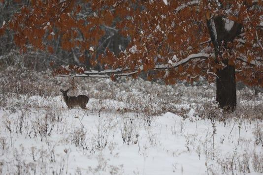Deer Mendon Ponds