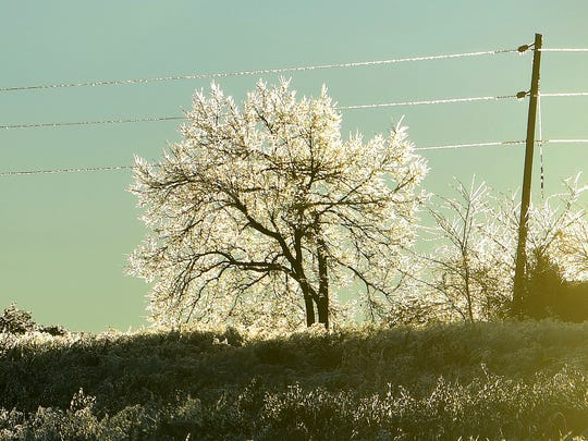 Early morning sunlight illuminates the icy branches of a tree and power lines visible from Frontier Drive on an ice-covered Friday morning, Nov. 16, 2018.