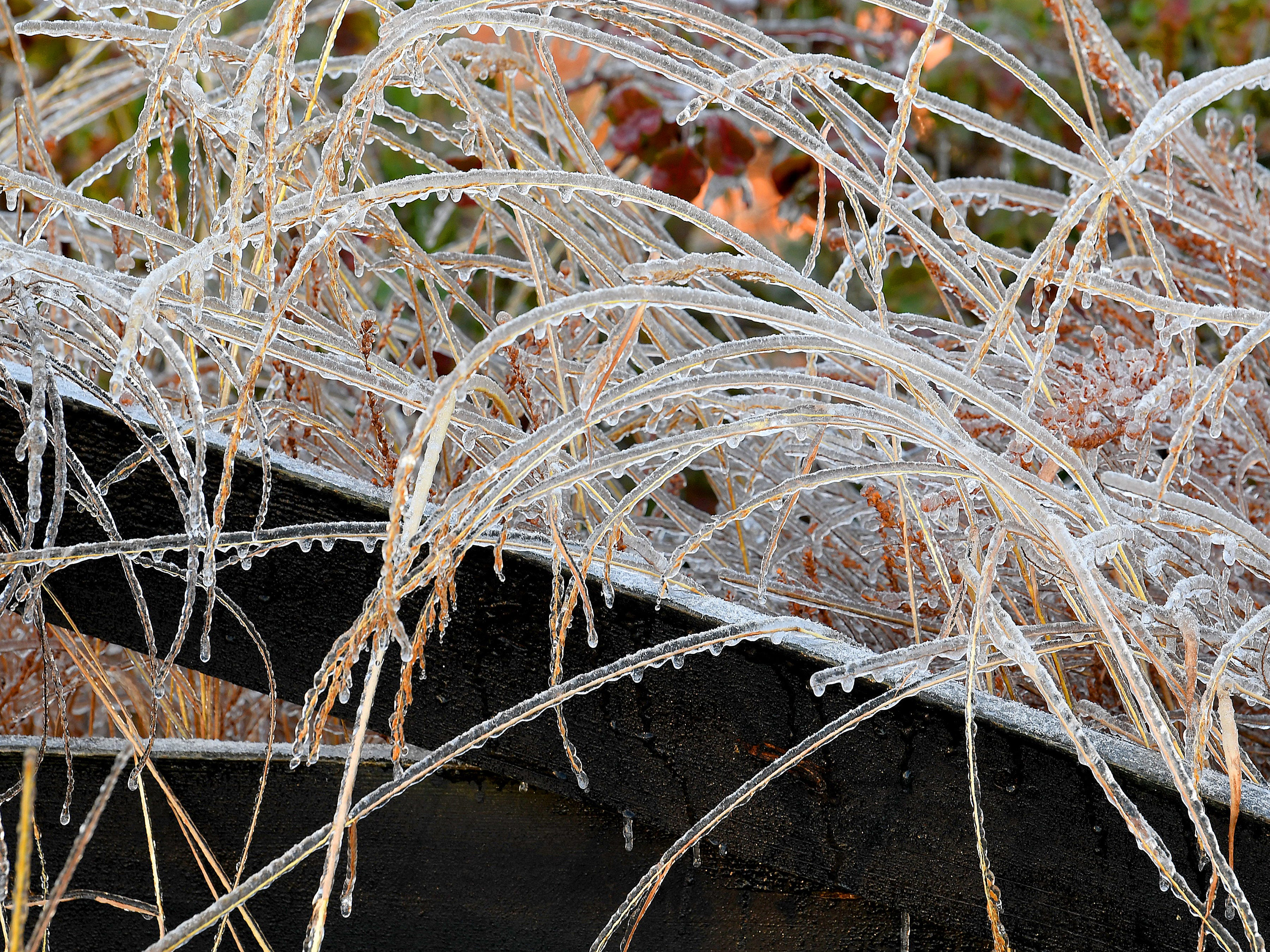 Tall grass covered in ice against a wooden fence along the boundaries of the Frontier Culture Museum on an ice-covered Friday morning, Nov. 16, 2018.