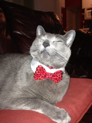 Pinko Commie You-Know-What strikes a smug pose with his holiday collar on.