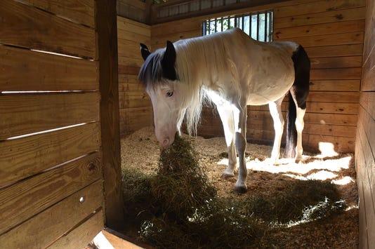 Tcn 1116 Eraf Horses 02