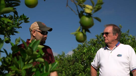 "Fred Gmitter, a geneticist at the University of Florida Citrus Research and Education Center, right, visits a citrus grower in an orange grove affected by citrus greening disease in Fort Meade, Fla., on Sept. 27, 2018. ""If we can go in and edit the gene, change the DNA sequence ever so slightly by one or two letters, potentially we'd have a way to defeat this disease,"" says Gmitter."
