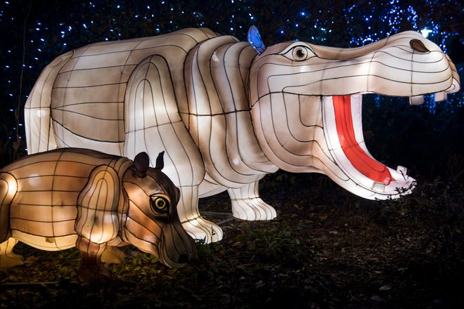Bibi and Fiona lanterns are positioned front-and-center for guests to pose with during the 36th annual Festival of Lights at the Cincinnati Zoo on Friday.
