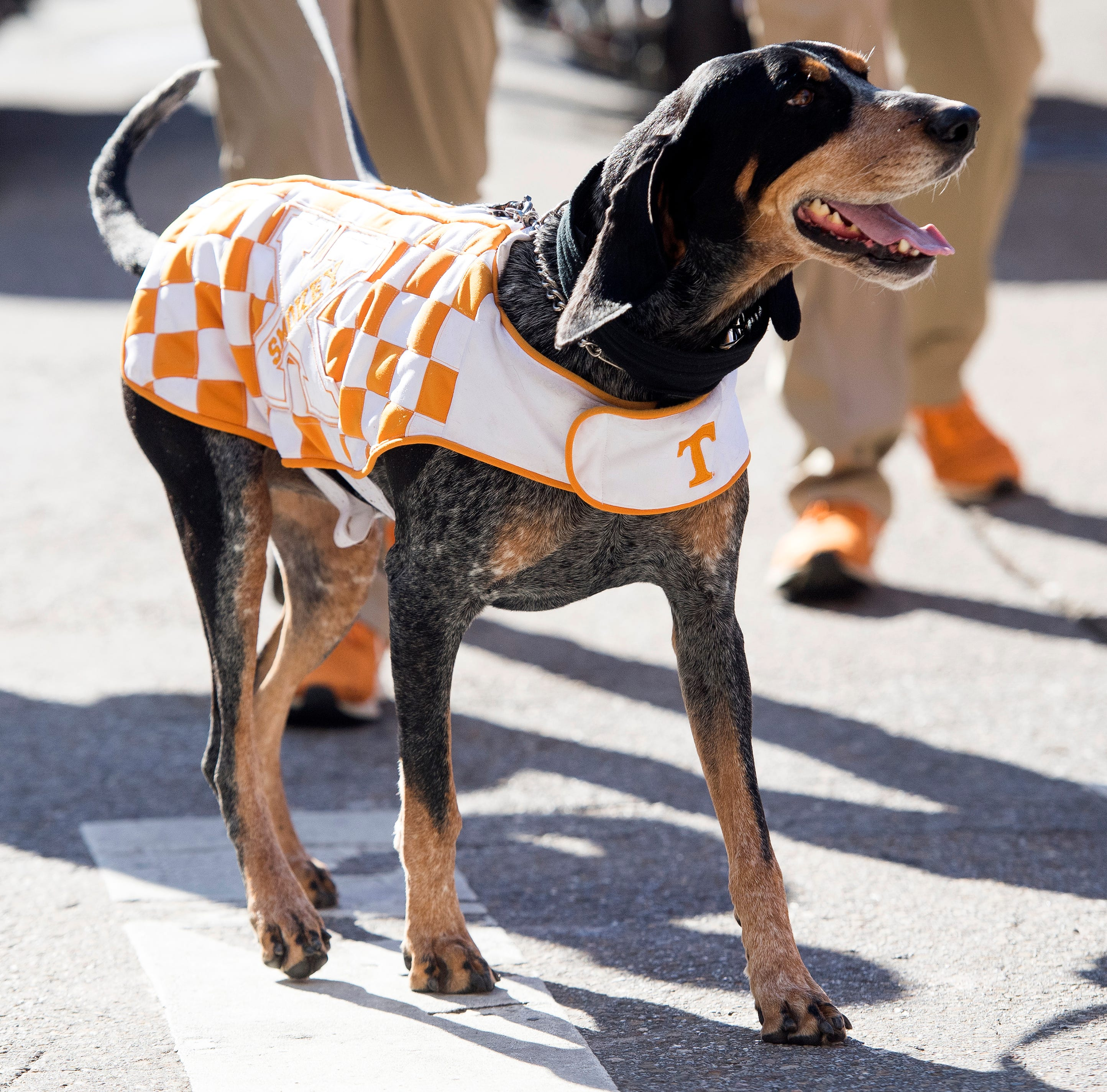 Bluetick coonhound signed into law as Tennessee's official state dog