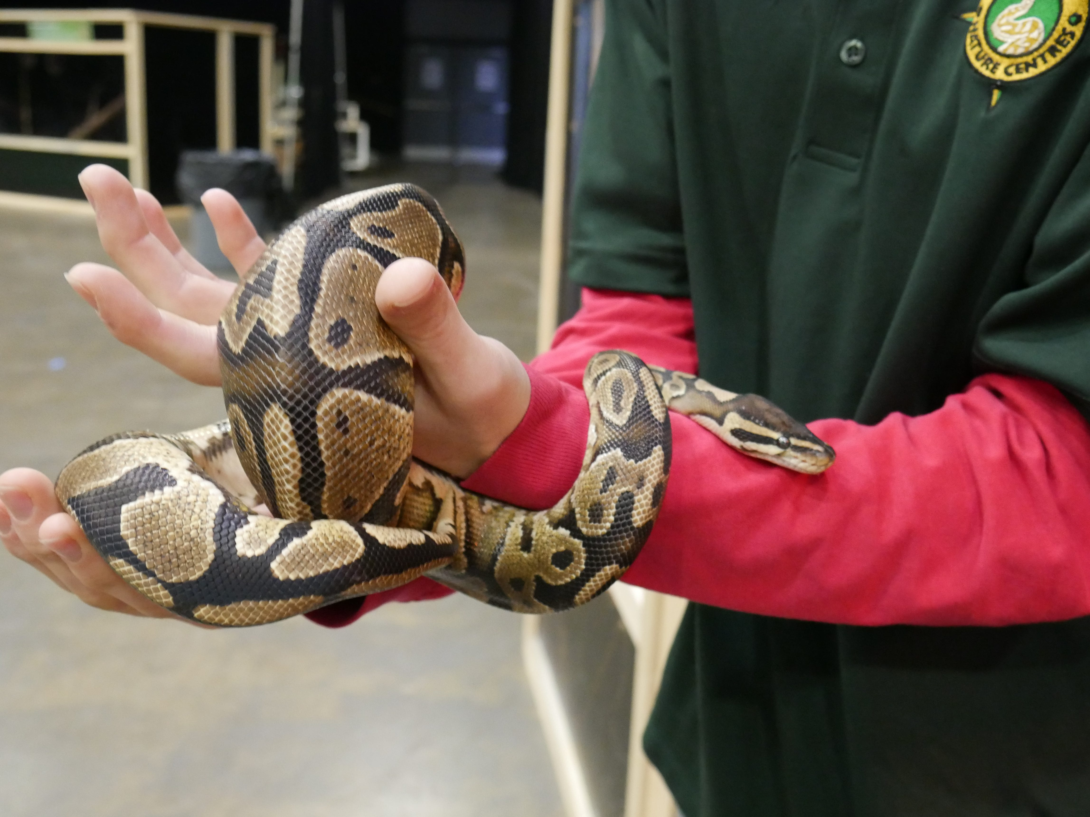 A snake at the Natural History Exhibition on Nov. 17, 2018, at the Mid-Hudson Civic Center in Poughkeepsie. Little Ray's Nature Centers and ZooAmerica coordinated with the Foundation for Animal Rescue and Education for the weekend-long exhibit, which also features a sloth, a porcupine, an armadillo, rabbits, tarantulas and more.