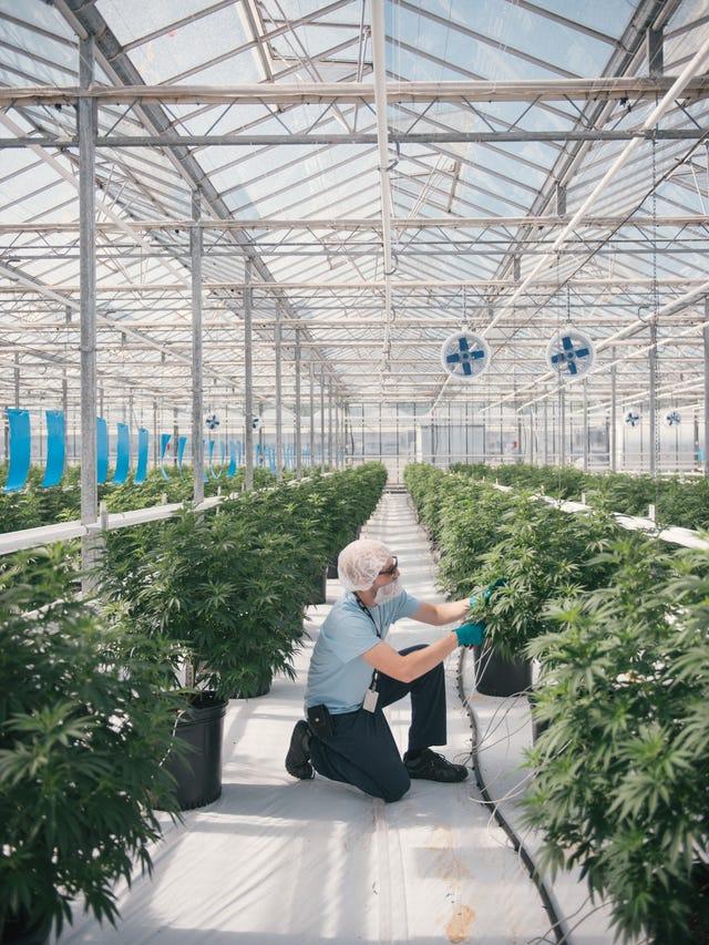 Binghamton hemp processing plant a $150M investment