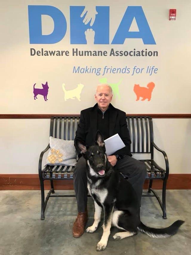 Image result for delaware humane society joe biden dog