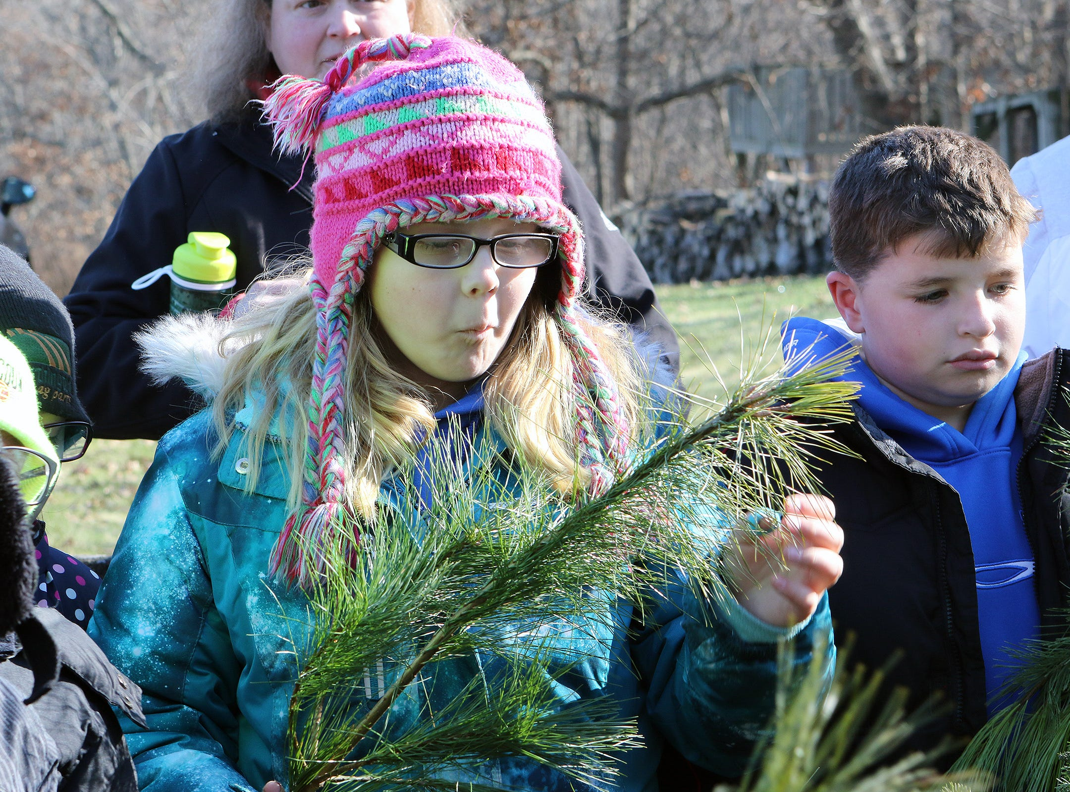 Albany fourth grader, Macknzie Clason, examines the branch of a pine tree at Lancaster's Winterberry Tree Farm in Brooklyn on Nov. 15. Students visited the farm to learn about the Christmas tree industry and see Alice in Dairyland help cut the a Christmas tree to mark the start of the 2018 season.