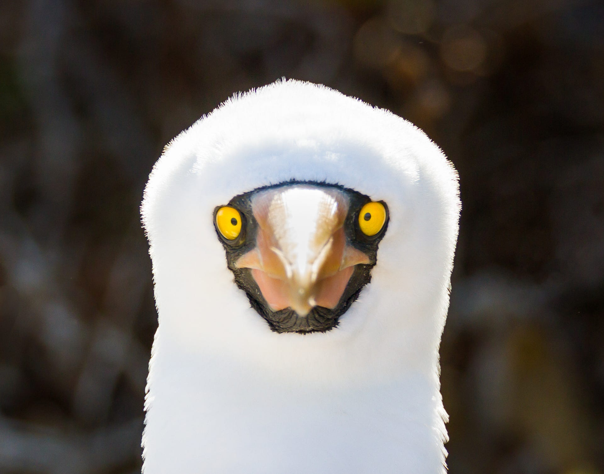 Galapagos Islands wildlife: Photos of unusual animals