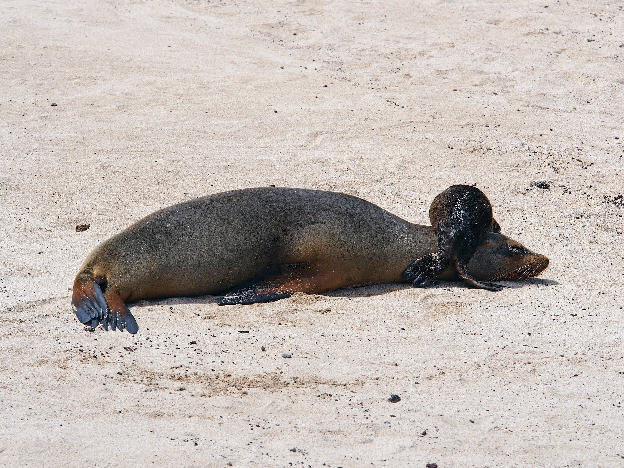 Sea lions in the Galapagos Islands, Ecuador.