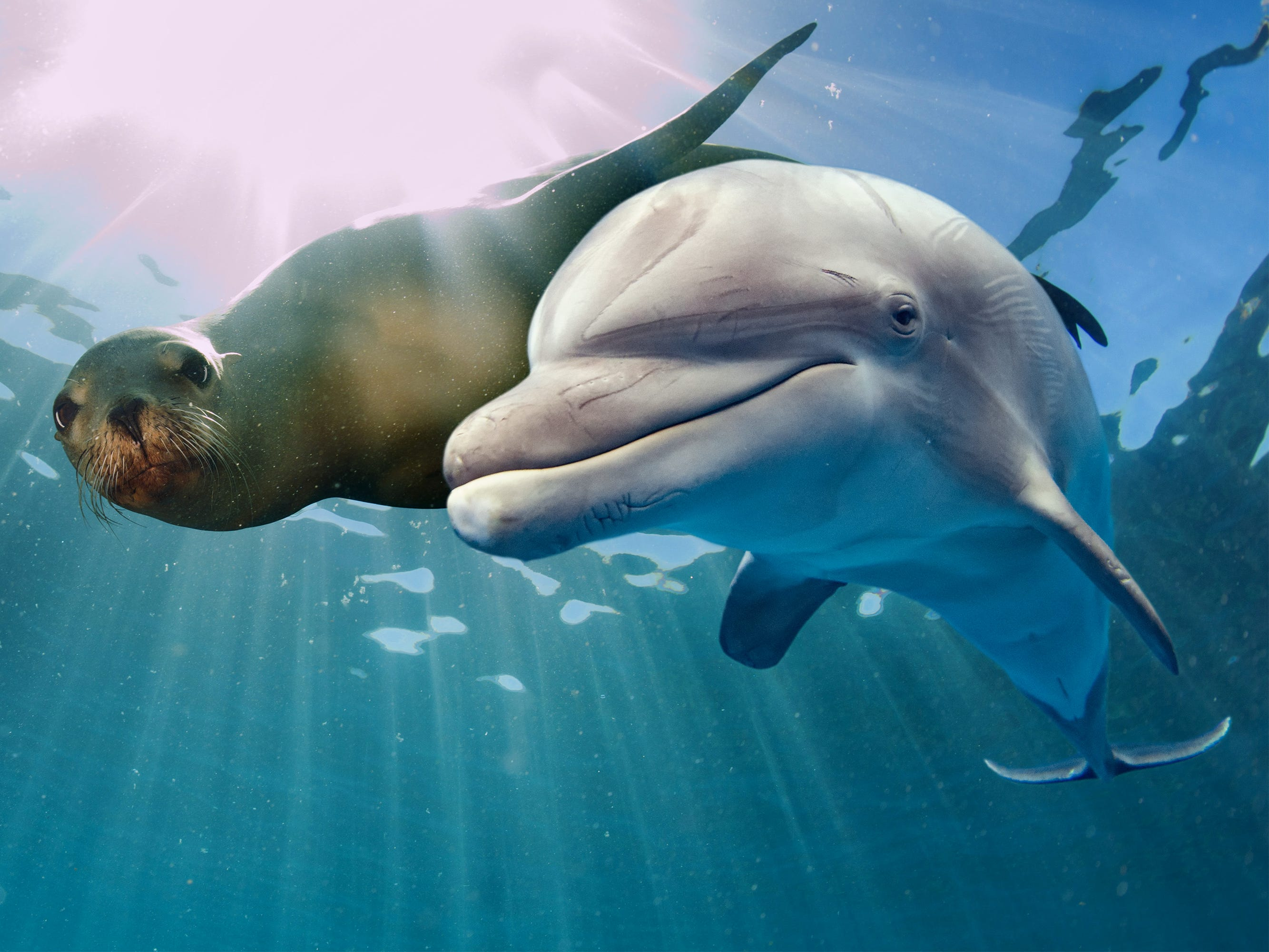 A sea lion and dolphin in the Galapagos Islands, Ecuador.