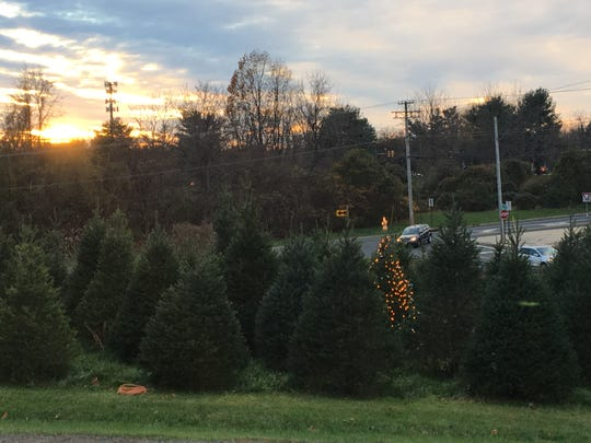 Natalie Gorsegner's 'forever tree' is lit up at Cedar Hill Farm and Nursery on Red Hill Road in Middletown.