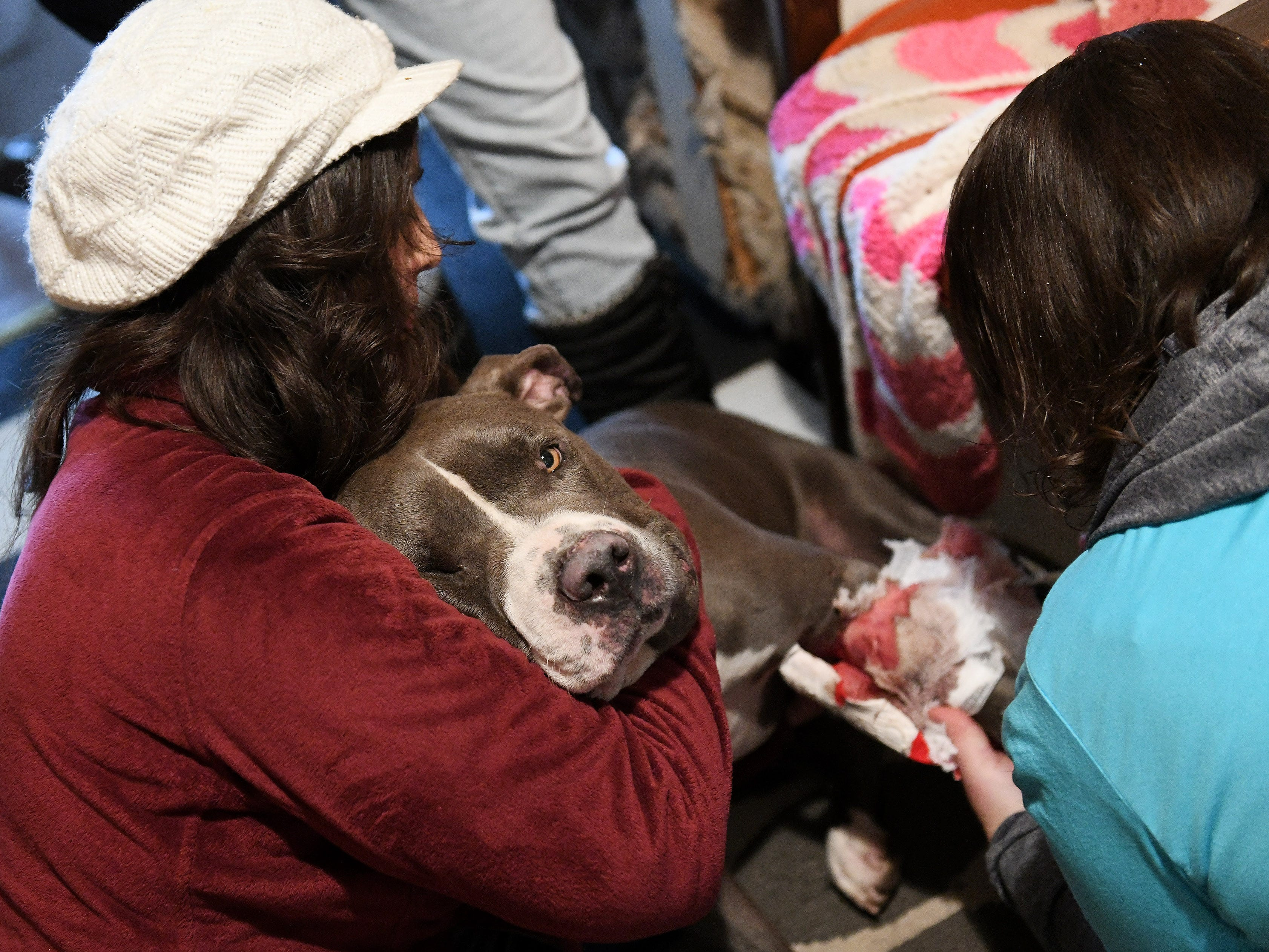 As part of the outreach of the Animal Care Network, volunteers from Banfield Pet Hospital, Elizabeth Vega, left, comforts King, a pit bull, while Kelly Abate changes his bandages at his home in Pontiac on Nov. 18, 2018.