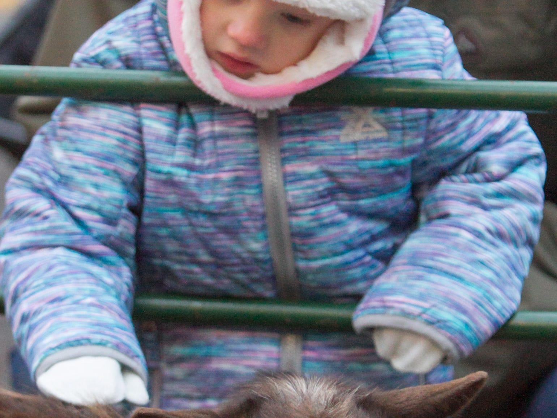 2 1/2-year-old Cora Johnson pets a goat at the Brighton Holiday Glow Saturday, Nov. 17, 2018.