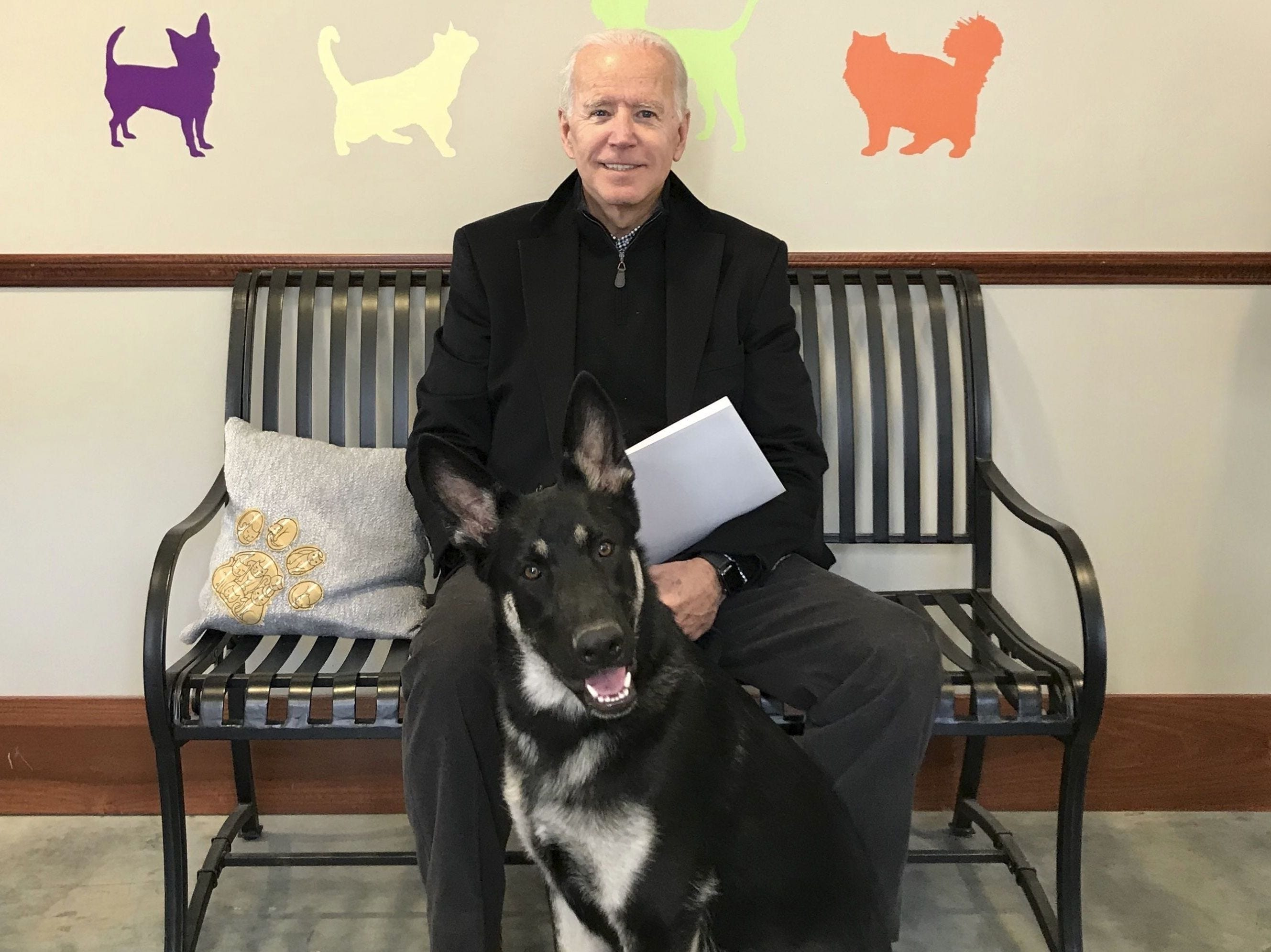 The White House has been without dogs for four years – that s changing with Joe Biden