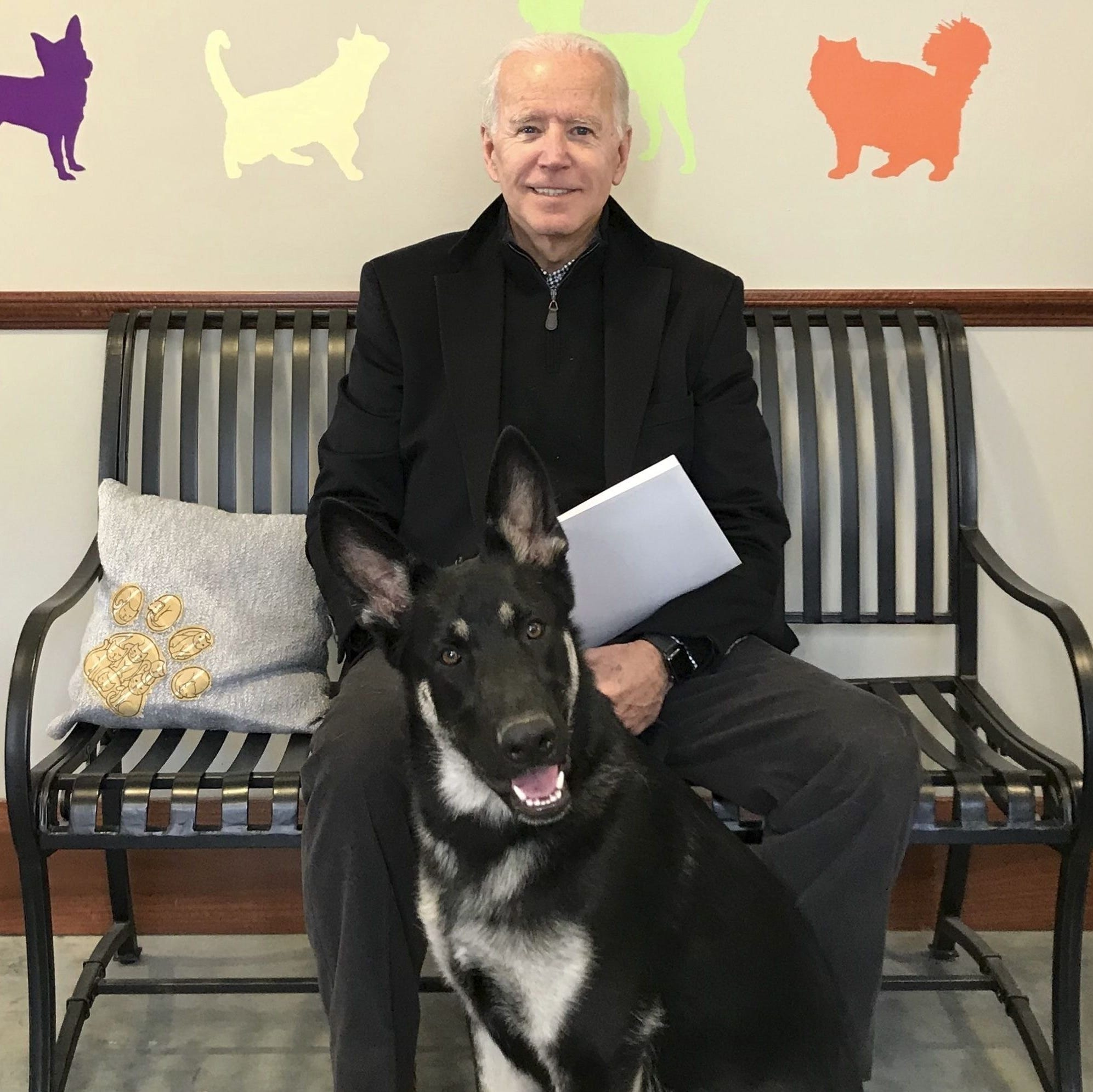 Joe and Jill Biden fostered Major, their German shepherd, before they decided to adopt him from the Delaware Humane Association.