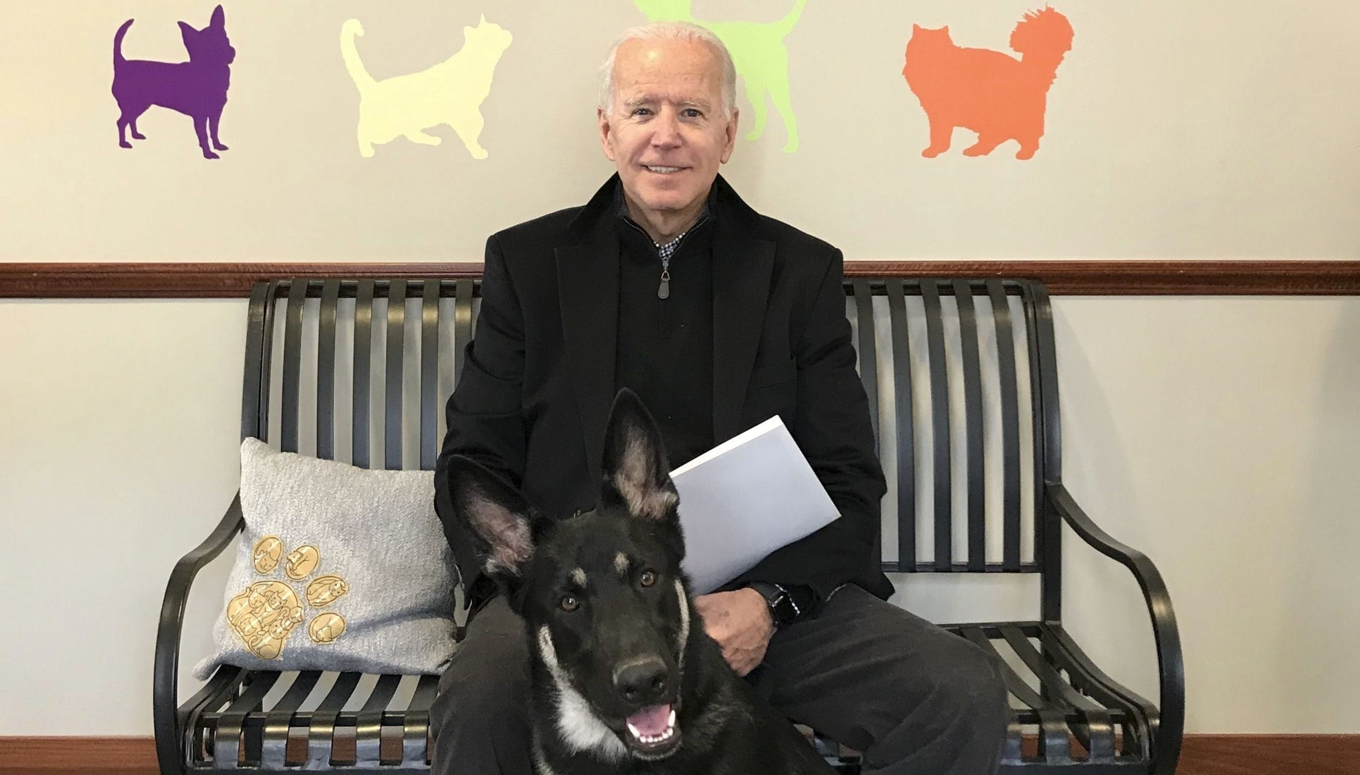 Meet Major! The rescue dog is the newest member of the Biden family