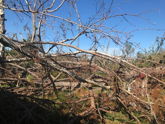 Fallen trees and branches cover the backyard of Damon Zeigel and Olivia Hale's home in Callaway, Florida.