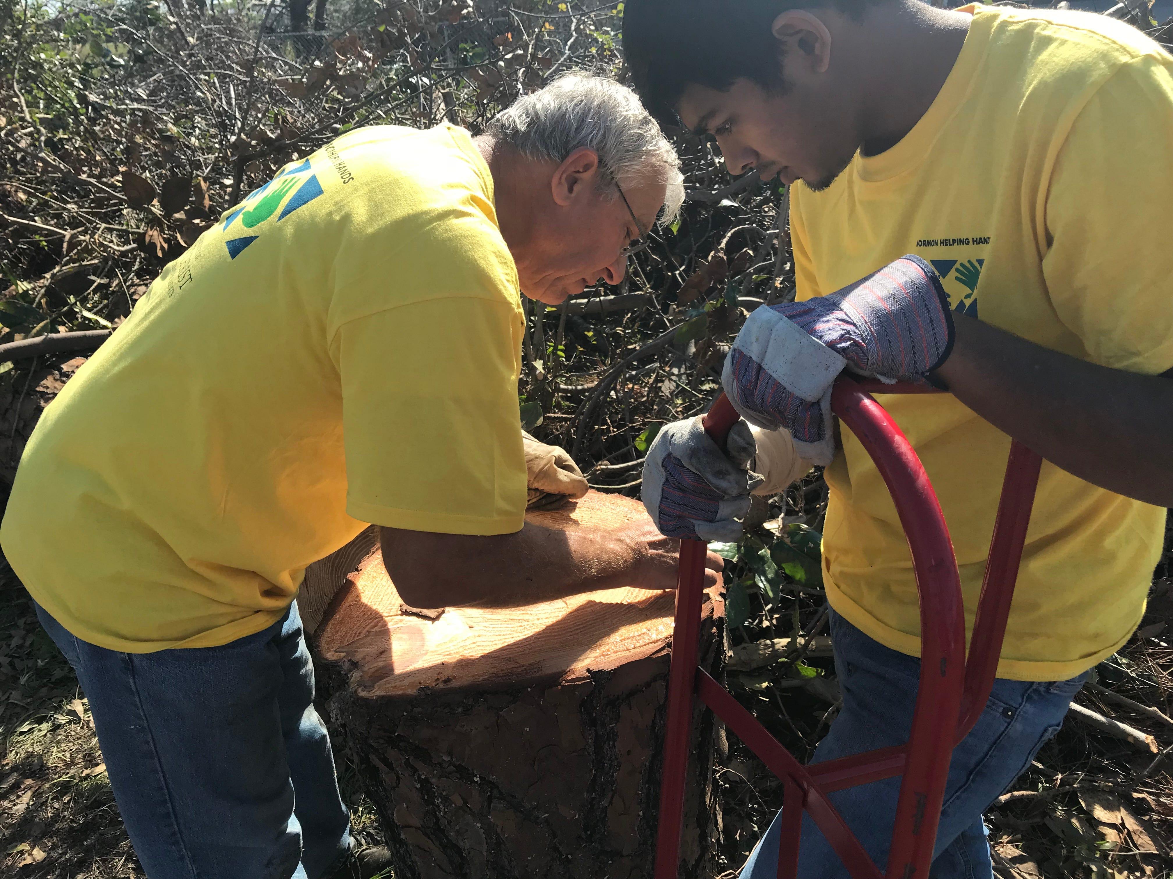 George Edge counts tree rings on a freshly cut tree stump.