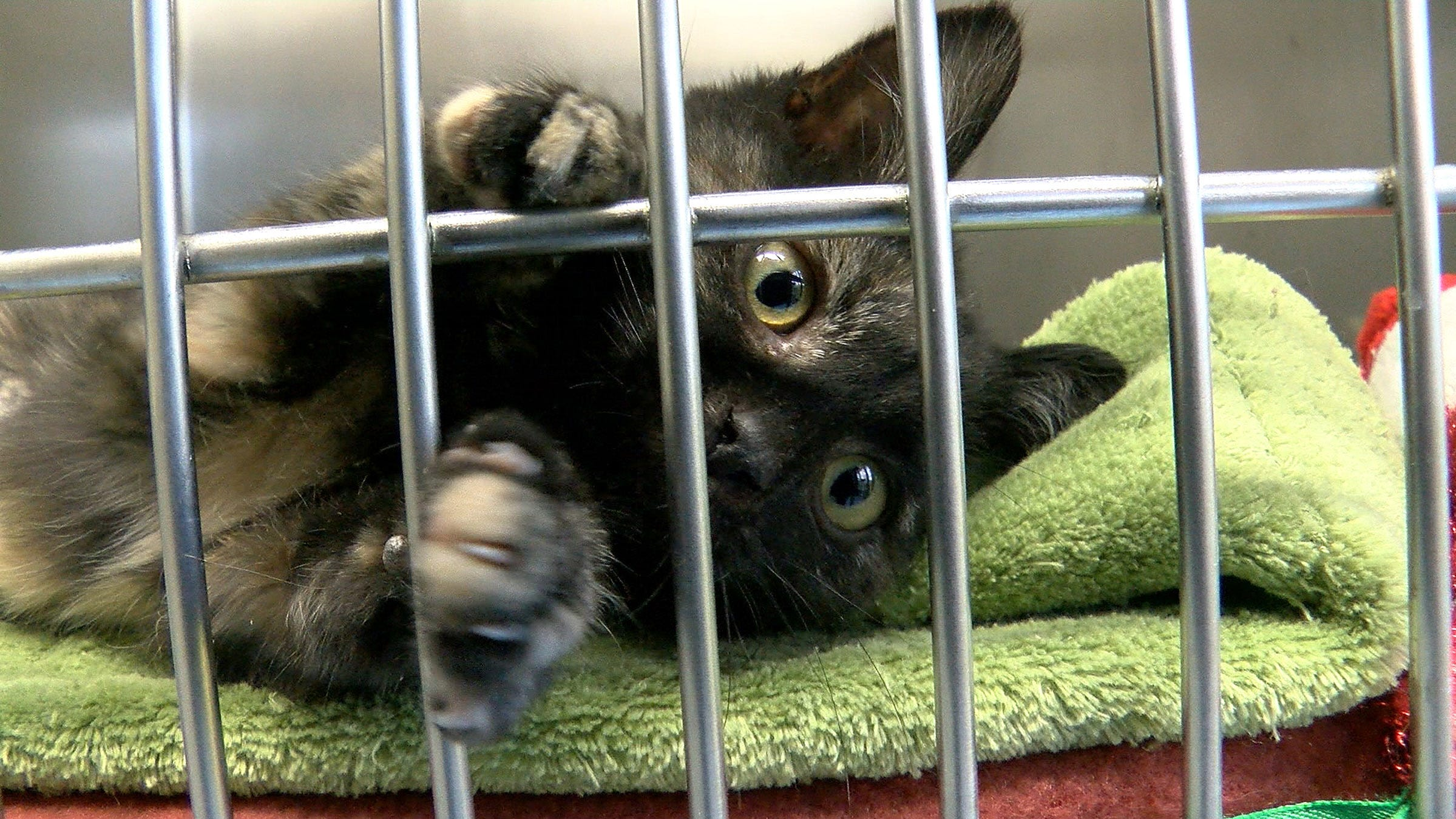 Millennials are adopting more rescue pets. That's good news for NJ shelters