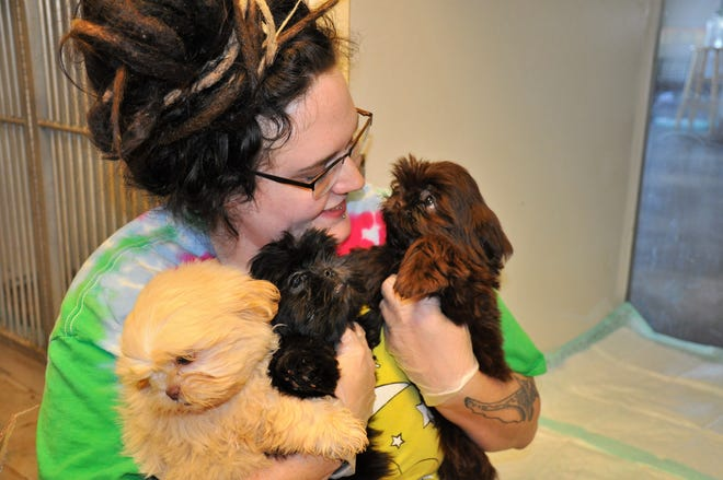 Hope Gallaway with Rescue the Animals, SPCA, in Abilene, Texas holds three Shih Tzu puppies after cleaning their kennel space on Monday. The pups were among 78 dogs rescued from a filthy house in Callahan County.