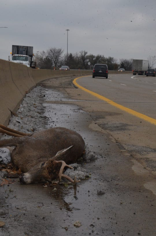 A dead buck on the shoulder of the northbound traffic of I-194 in Battle Creek on November 19, 2018.