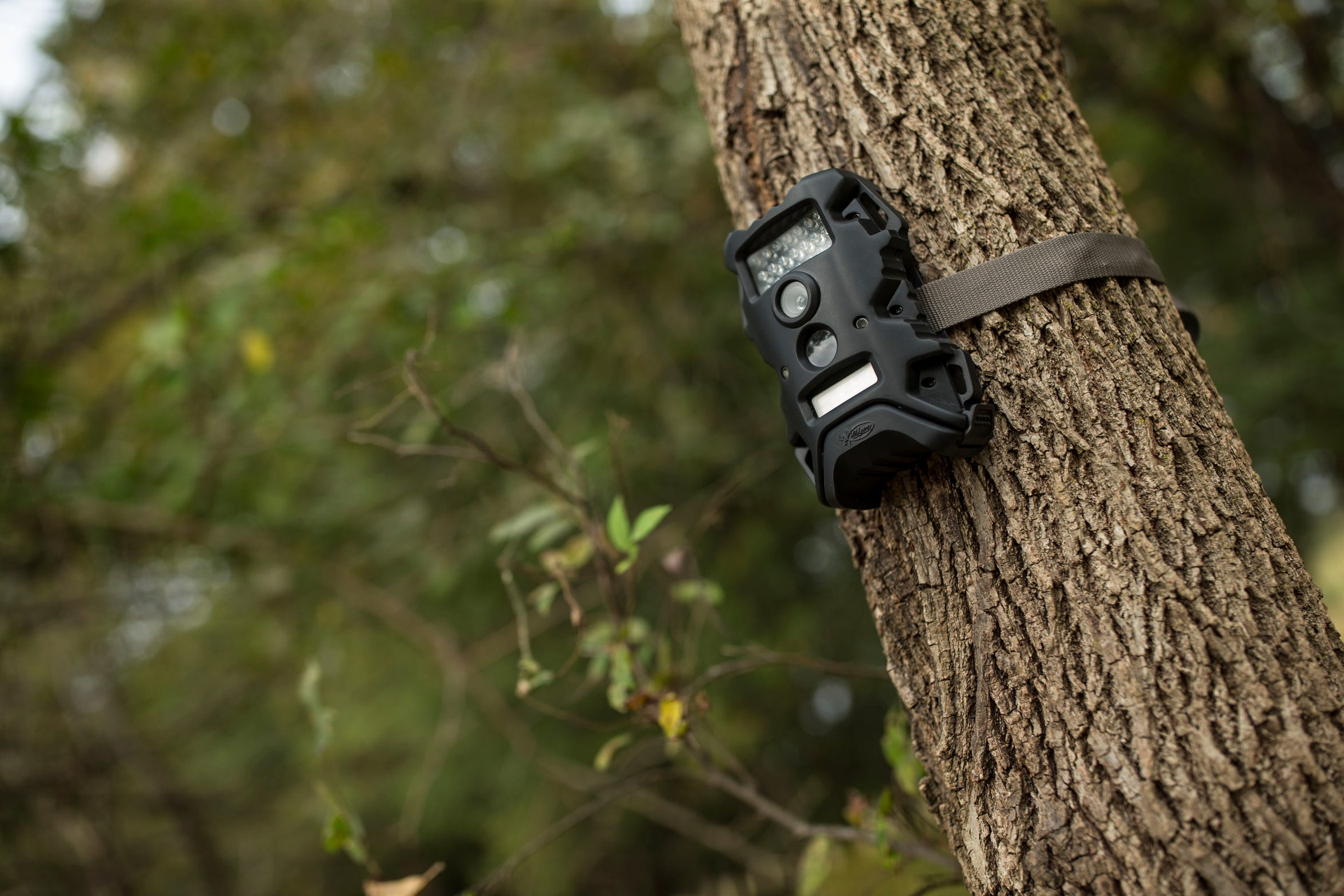Wildgame sells a wide variety of trail cameras for less than $100.