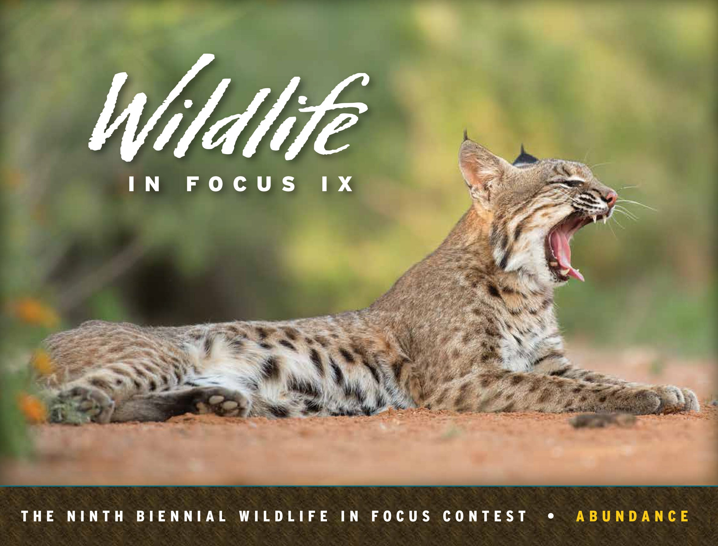 The Wildlife in Focus book series features award-winning images from South Texas ranches.