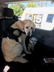 Emotional support dogs Bronte and Koji from Tri-State K-9 Response in Cherry Hill were part of a team helping those affected by the California wildfires and Thousand Oaks bar shooting.