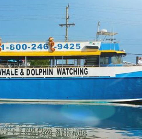 Whale-watching business sues over lost phone number