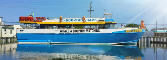 Whalewatching ship