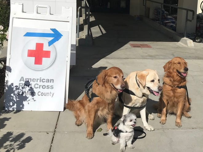 The Tri-State Response Team from Cherry Hill brought emotional support dogs CeCe, Bronte , Kerri and Koji to California to work with people affected by the Thousand Oaks shooting and wildfires.