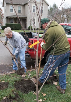 Jim Slyh, left, and Gary McFadden carefully dig a place for a Magnolia tree to be planted on Church Street Friday afternoon as part of the Chillicothe Tree Commission venture to beautify local areas.