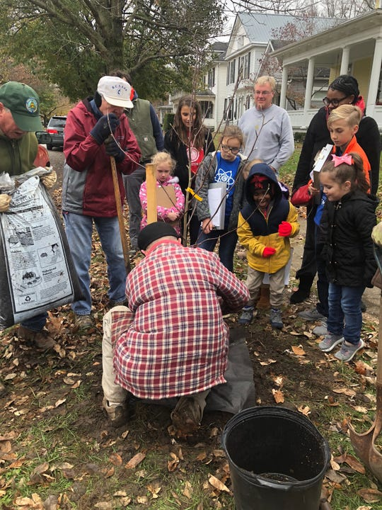 Chillicothe City Schools elementary STEM students watch as members of the Chillicothe Tree Commission plant a sapling along Church Street Friday.