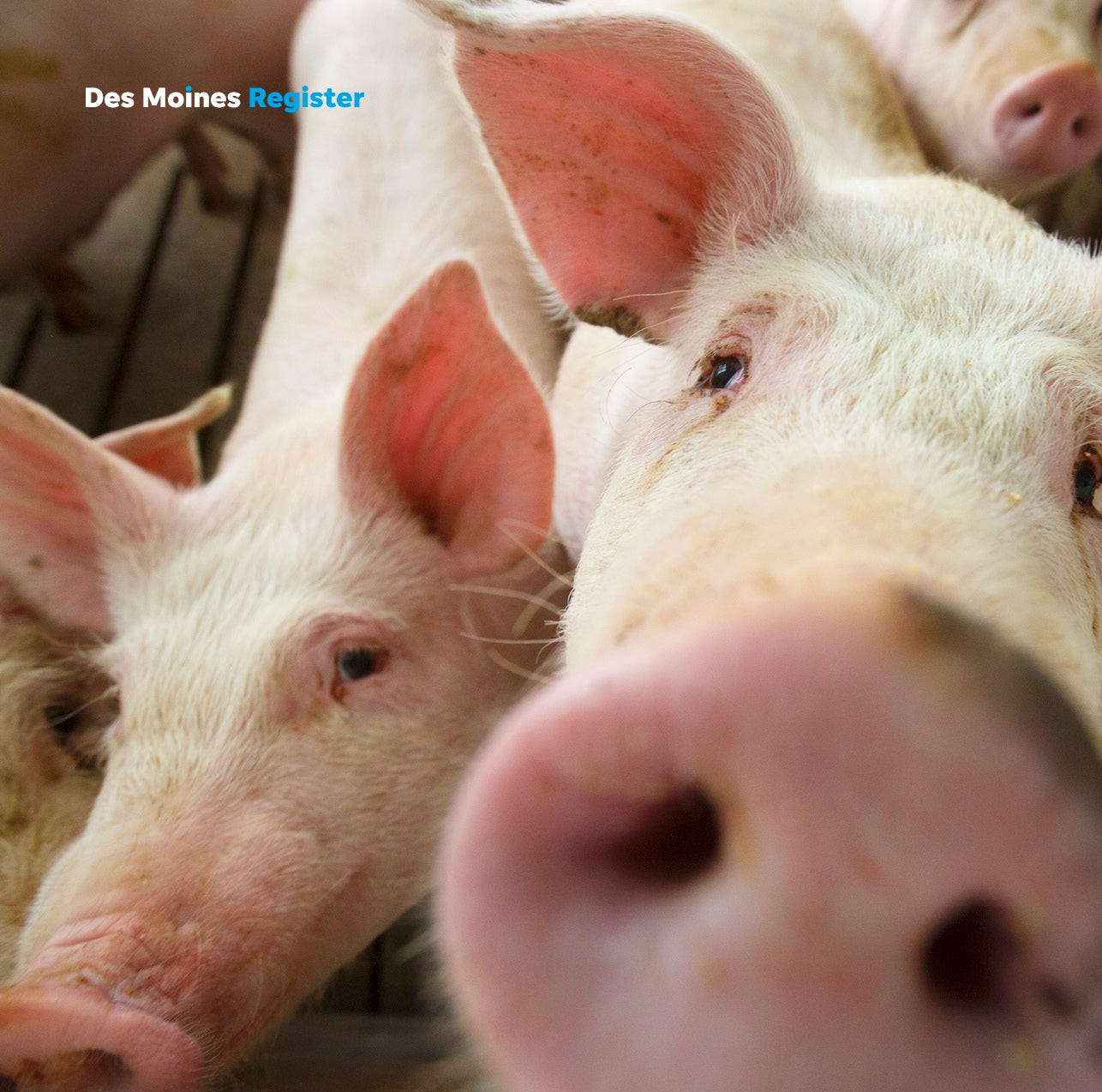 Iowa pork producers need expanded export markets, not regulations